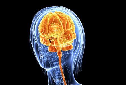 9567b4b32 الورم الدماغي هو في الواقع مصطلح عام تنضوي تحته جميع الأورام الحميدة  والخبيثة التي تنشأ داخل الدماغ (الأورام داخل القحف). ومن بين هاته الأورام  نذكر على سبيل ...